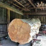 Ein sehr alter Holzstamm in der Holzhütte.